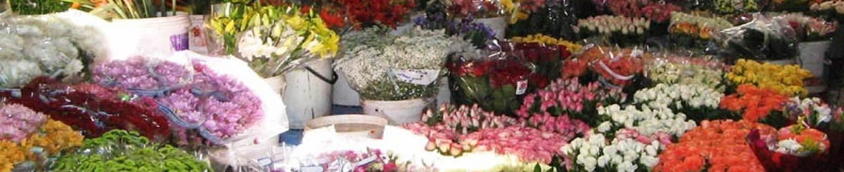 Meer dan 8.000 bloemisten in Nederland slider
